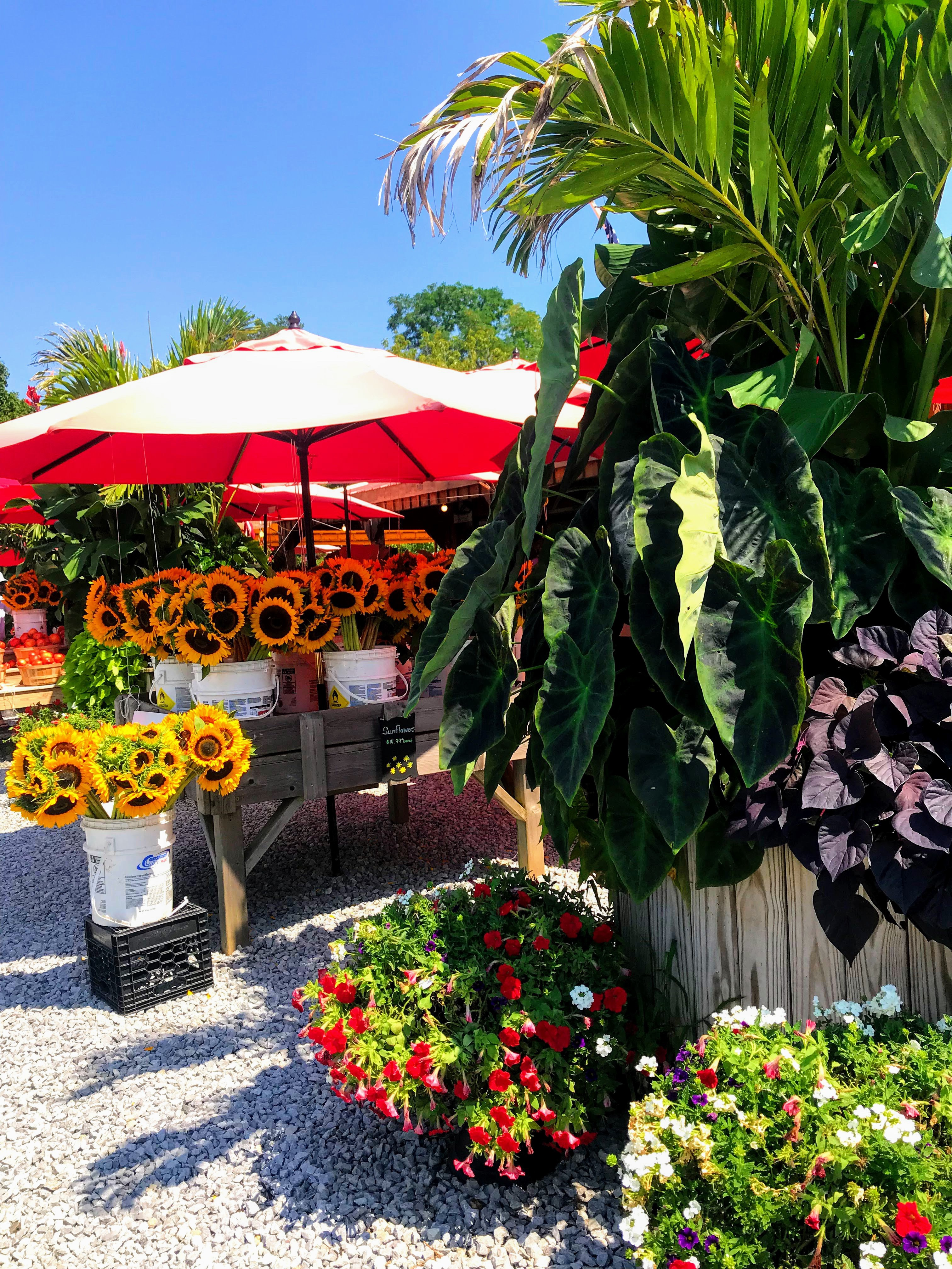 Farm Stands are common to see around the North Fork AVA wine trail